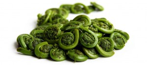 Spiral of fresh Fiddleheads