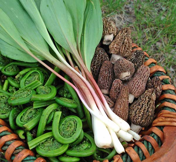 The Grand Trio of Spring - Wild Leeks, Morel Mushrooms and Fiddlehead Ferns