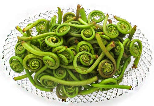 Fresh Western Fiddleheads