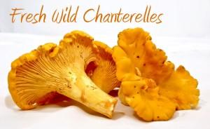 Fresh-Wild-Chanterelles