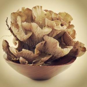 Pig's Ear Mushrooms